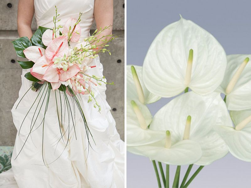 May Flowers: 20 Best Flowers in Season in May for Your Wedding ...