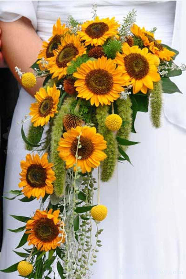 Warmth and happiness 20 perfect sunflower wedding bouquet ideas cascading sunflower bouquet junglespirit Images